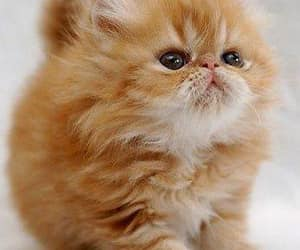 cat, kitty, and orange image