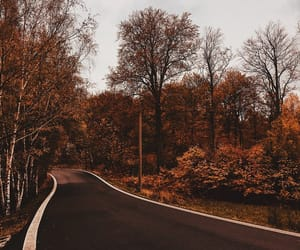 autumn, forest, and road image