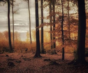 autumn, chill, and chilling image