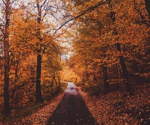 autumn, autumnal, and colourful image