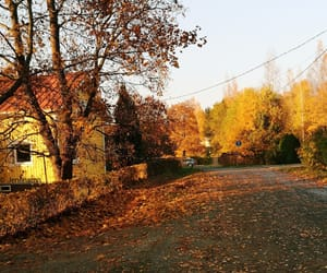 autumn, fall, and yellow image