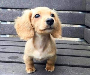 bench, puppy, and cute image