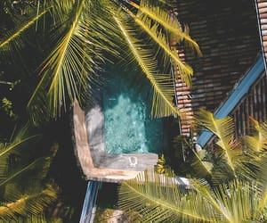 nature, palms, and summer image