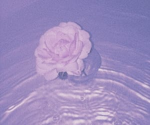 รูปภาพ flowers, rose, and water