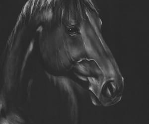 art, horses, and paintings image