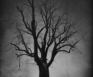 tree, death, and black and white image