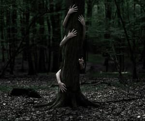 hands, dark, and forest image