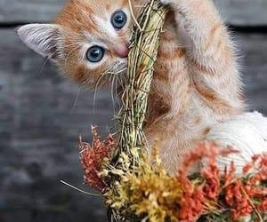 Animales, mascota, and gato image