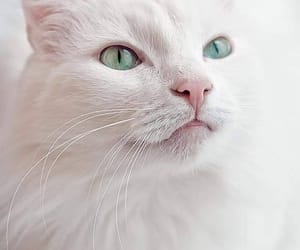 kitty, adorable, and animals image