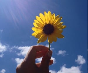 sunflower and flower image