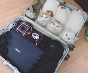 cats, pets, and suitcase image