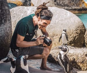 adventure, animals, and louis image