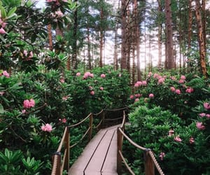 flowers, nature, and amazing image
