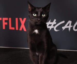 cat, salem, and netflix image