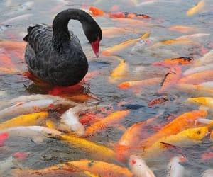 animal, nature, and fish image