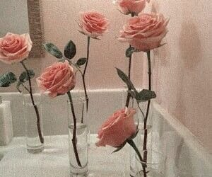 rose, soft, and aesthetic image