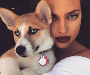 dog, irina shayk, and model image