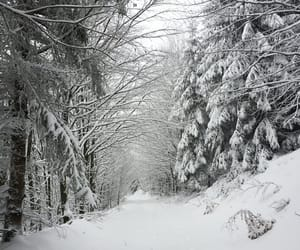 forest, hike, and snow image