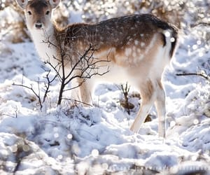 animal, snow, and winter image