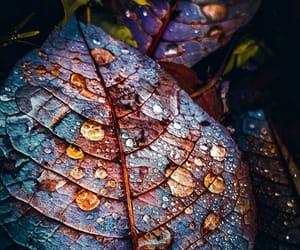 color, شجر, and صور  image
