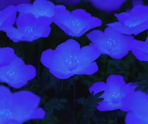 anime, flower, and blue image
