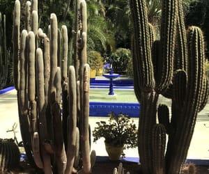 blue, cactus, and jardin image