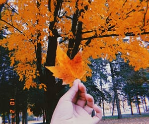 35 mm, autumn, and orange image