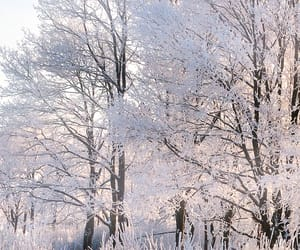 winter, beautiful, and cold image