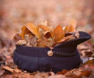 autumn, colorful, and leaves image