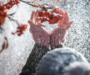 berries, hands, and snow image