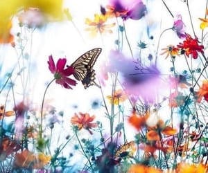 Flying, landing, and Wild Flowers image