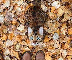 autumn, cat, and animal image