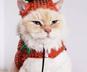 cat, gato, and Halloween image