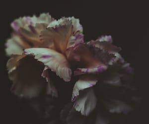 dark, florals, and life image