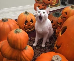 cat, Halloween, and aesthetic image