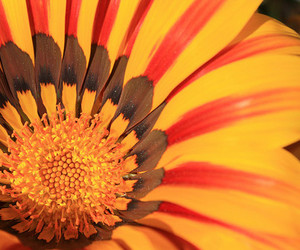 beauty, color, and flower image
