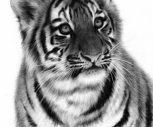 art, big cats, and tigers image