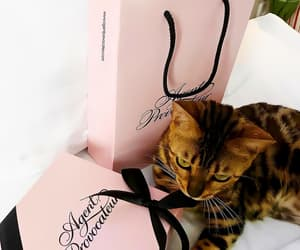 agent provocateur, glamour, and we heart it image