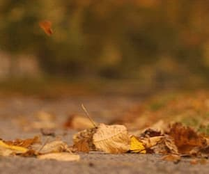 autumn, dried leaves, and fall image