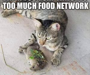 funny cats picture food image