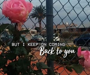 rose, tumblr, and quotes image