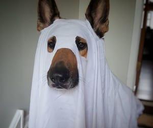 boo, dog, and Halloween image