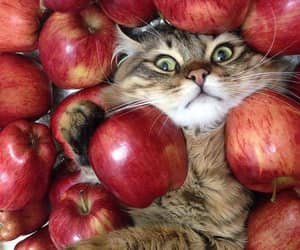 apple, cat, and kitten image