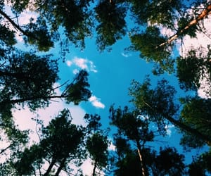 aesthetic, clouds, and forest image