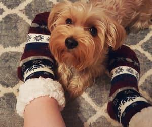 autumn, christmas, and dog image