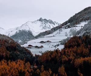 autumn, brown, and nature image