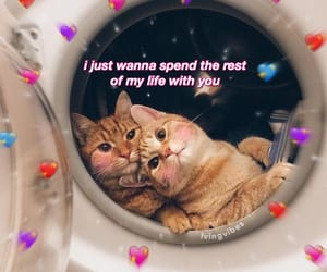 meme, cats, and cute image