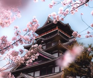 japan, flowers, and cherry blossoms image