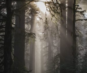 calm, forest, and sun image