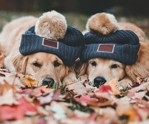 autumn and dogs image
